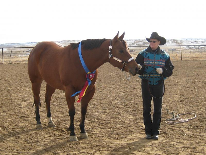 2012 Halter Hi Point Winner